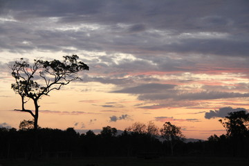 Sunset coloured clouds with Tree silhouette
