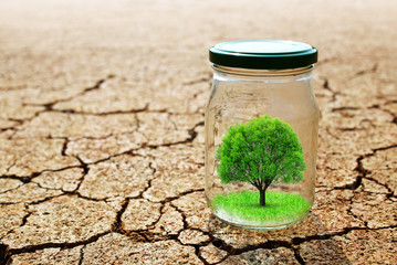 Growing tree in a glass on dry cracked earth.The concept of environmental protection or global warming.
