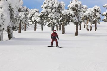 Snowboarding on a forest ski slope. White winter mountain landscape