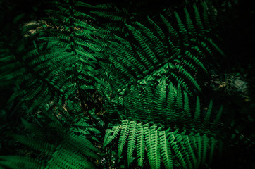 FERN - Spring green in the forest floor