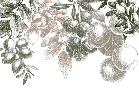 Background with hand drawn nuts on branches