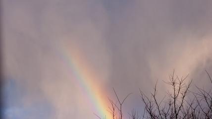 Rainbow after rain. Macro photography