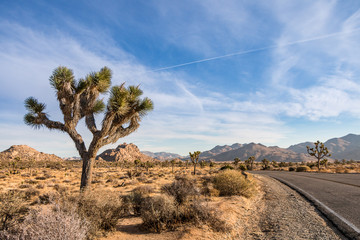 Side of the road in Joshua Tree Park in Southern California