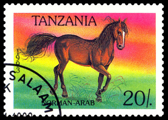 Vintage  postage stamp. Norman-Arab horse.