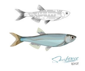 Sprat sketch vector fish icon. Isolated marine atlantic ocean sprats. Linear silhouette sea fish. Isolated symbol for seafood restaurant sign or emblem, fishing club or fishery market