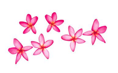 leelawadee flowers isolated on white background