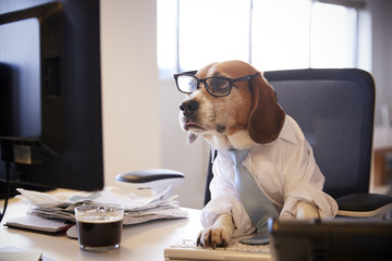 Beagle Dressed As Businessman Works At Desk On Computer Wall mural