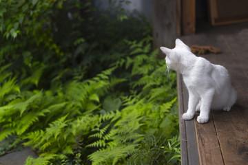 Cute cat looking fern beautiful.
