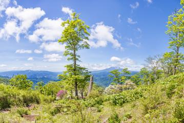 新緑の木と富士山