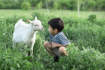 A boy is standing with a goat on the field on a sunny day.
