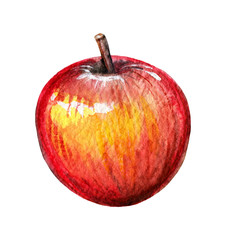 Red apple isolated on white background. Watercolor hand painted illustration