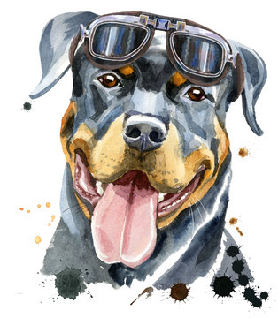 Watercolor portrait of rottweiler