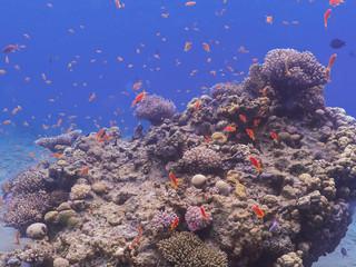 Diving in underwater coral reef world