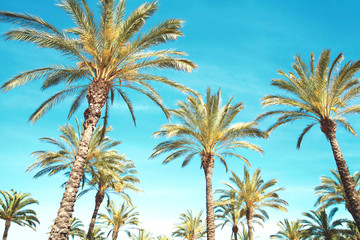 Travel, tourism, vacation, nature and summer holidays concept - palm trees, blue sky background