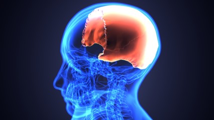 3D illustration of skull anatomy - part of human skeleton medical concept.