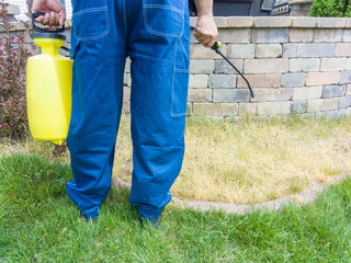 Gardener spraying grass with weed killer