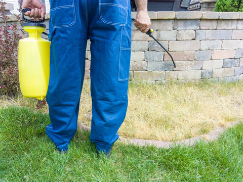 Gardener spraying grass with weed killer