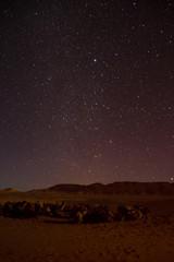 Morocco: Sahara Camels at Night