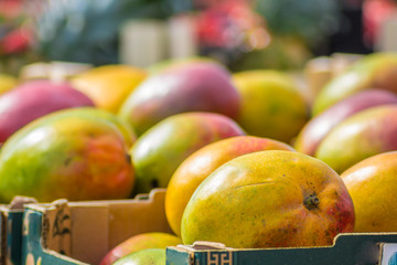 ripe sweet mangoes in boxes at an outdoor retail fruit stall