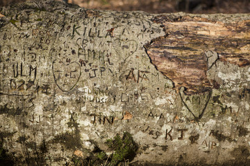 Close-up of text on fallen tree in forest