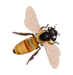 Realistic looking fly illustration