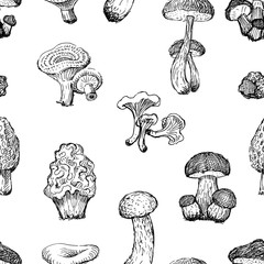 Pattern of the drawn edible mushrooms