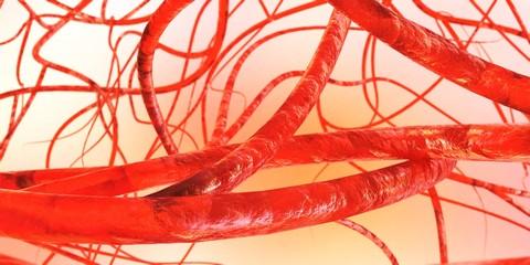 blood vessels, veins, arteries, 3D rendering