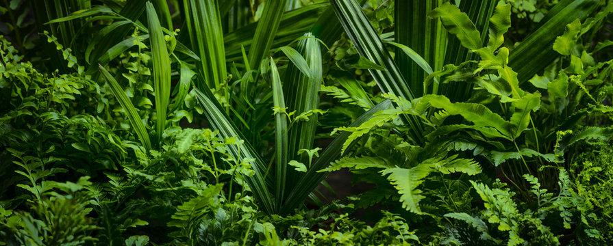 ferns leaves