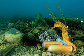 Plastic pollution of ocean. Plastic bottles, bags and drinks cans pollute sea. Seahorse and trash garbage