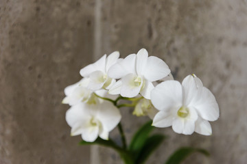 white orchid flowers with copy space