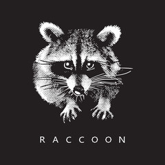 Raccoon - realistic portrait on black background. Black and white vector illustration in style of engraving, graphic design element for logo (logotype) or template. Cute animal of North America.