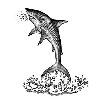 Shark jumping hand drawing vintage engraving style