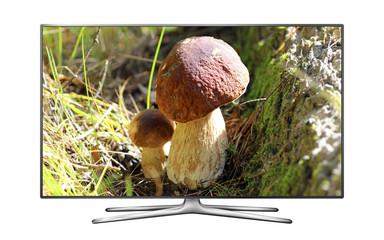 Smart TV with Oak Mushrooms image on screen