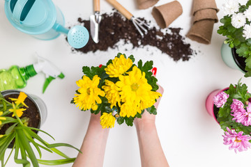 Photo of soil, watering can, scoop, rake, hands with flower pot