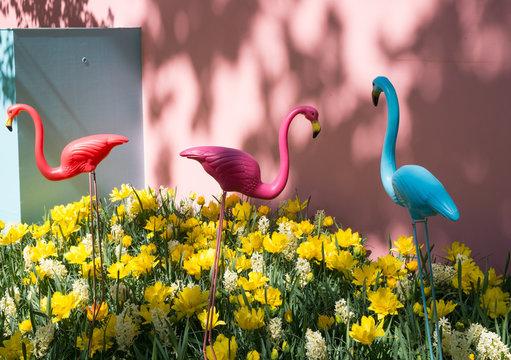 Pelikane im Garten