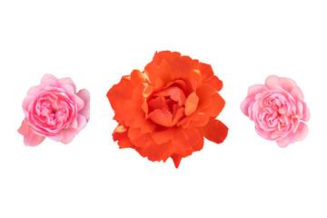 Set of three rosebuds isolated on white background