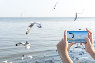 Woman hand holding and Taking photo on smartphone of Seagulls fly freely on the sky above the coast on screen of modern smartphone.  Booking travel holiday concept.