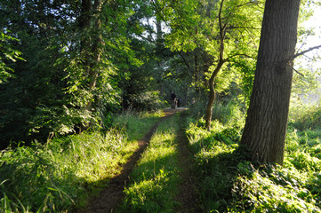 forest path to the lake on a sunny morning