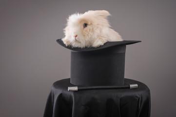 Magic hat with beautiful white rabbit