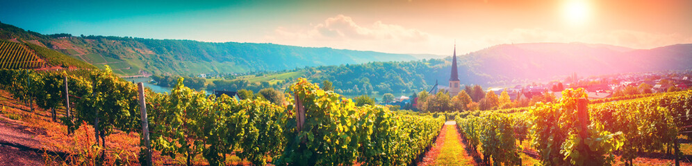 Panoramic landscape with autumn vineyards. Mosel, Germany Fototapete