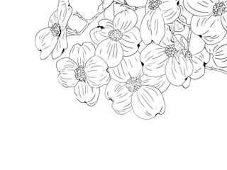 Hand drawn, Dogwood, line art