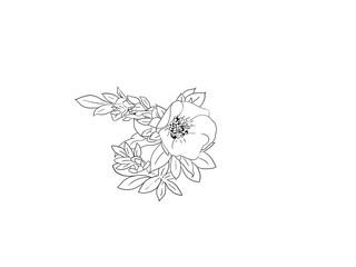 Hand drawn, flower, line art