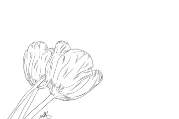 Hand drawn, Tulips, line art