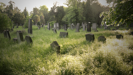Old cemetery stock images. Old Jewish Cemetery images. Old forest cemetery in Vienna. Overgrown gravestones in a cemetery
