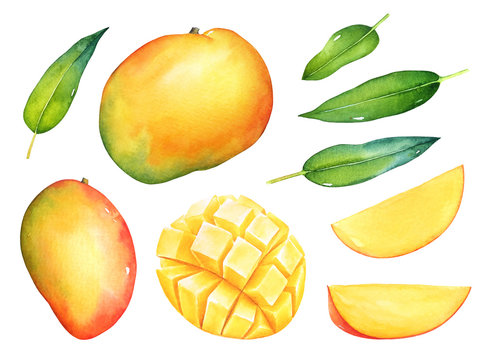 Hand drawn watercolor set of mango fruits with green leaves isolated on white background.