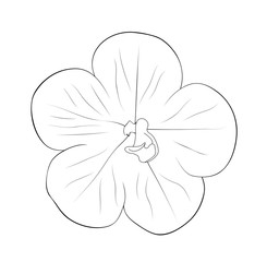 Vector illustration, isolated achimenes flower in black and white colors, outline hand painted drawing
