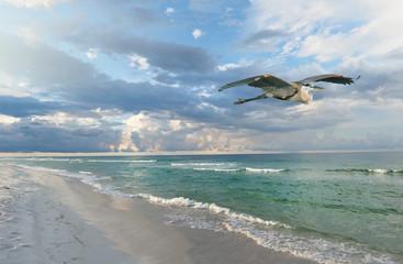 Beautiful Florida Beach at Sunrise as a Great Blue Heron Flies By