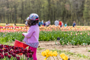 A young child is holding a red basket in a tulip farm