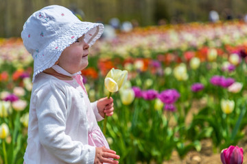 A toddler in a tulip farm is holding a yellow flower