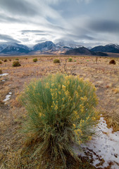 Life returns to a brush fire burned valley near Mono Lake